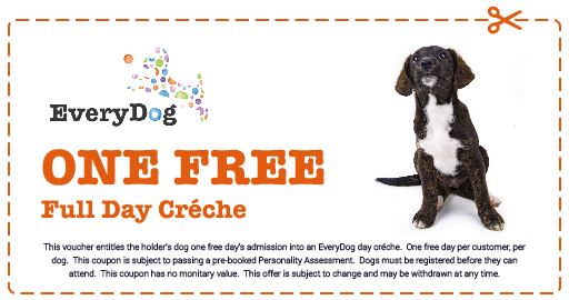 EveryDog Doggy Day Care Creche FREE Coupon in Kent