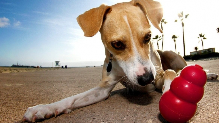 How to Use KONG to Fix Behaviour Problems in my Dog